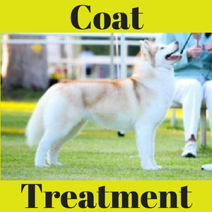 Coat Treatments